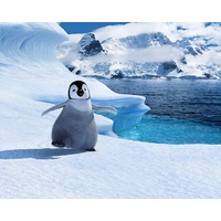 Wed 8 Jan @ 10.30am | HAPPY FEET