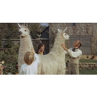 Wed 11 July @ 10.00am | DOCTOR DOLITTLE